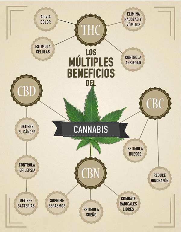 cannabinoides_infografia
