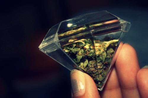 datos curiosos marihuana