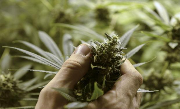 consumir marihuana sin fumarla
